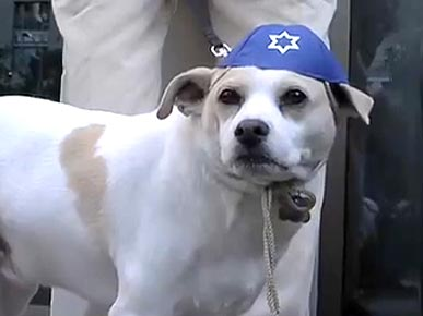 VIDEO: Canines Keep Kosher for Passover Seder in L.A.
