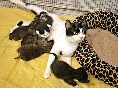The Water Bowl: House Cat Plays Mom to Bobcat Kittens! Plus, What's Inside a Dog's Brain?
