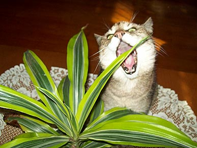 Caption Contest: Hungry Cat Attacks Plant!