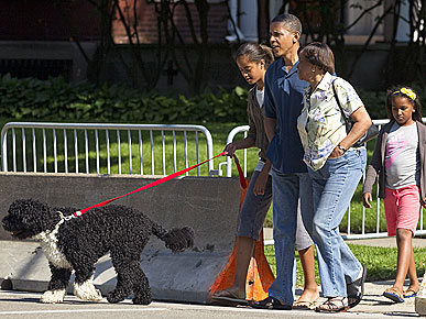SPOTTED: Bo Obama Takes Chicago!