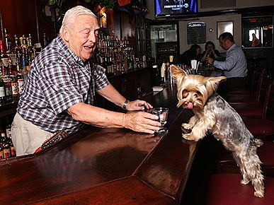 Jasper the Yorkie Helps N.Y.C. Pub Stay Open for Business