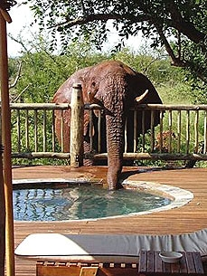 Elephant Gets Caught Guzzling Jacuzzi Cocktails