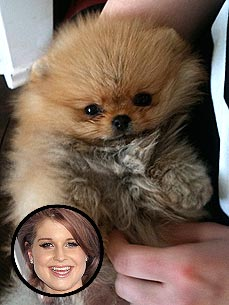 Kelly Osbourne Gets a New Puppy!
