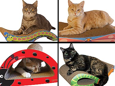 'Cute As a Bug' Cat Scratchers Live Up to the Buzz