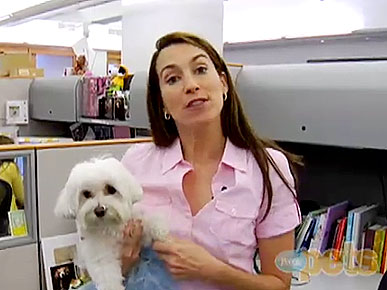 VIDEO: Andrea Arden's Tips for Taking Your Dog to Work