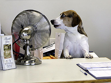 PHOTO CONTEST: Show Us Your Dogs at Work!