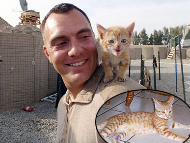 Mission: Get These Cats Out of Afghanistan