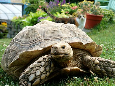 Pet Tortoise Missing for Four Years Returns Home