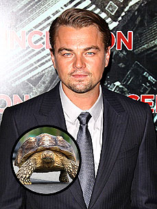 Leonardo DiCaprio Cozies Up to Someone New: a Tortoise!
