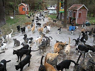 It Takes a Kitty Village: Caboodle Ranch in Need of More Manpower