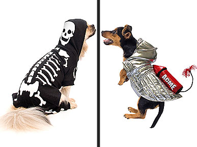 This Year's Hottest Halloween Trends for Pets