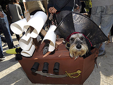 The Water Bowl: How Do Dogs Feel about Dressing Up? Plus, China's New Canine Obsession