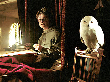 The Water Bowl: Harry Potter Fans Kidnapping Owls! Plus, Cats More Popular Than Jesus on Internet
