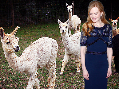 Surprise! Nicole Kidman Raises Alpacas