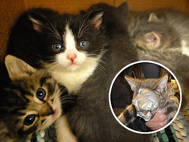 Cat Found Duct-Taped in Dryer Is Reunited with Her Kittens