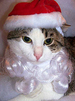 From the North Pole: Santa Cats & Dogs