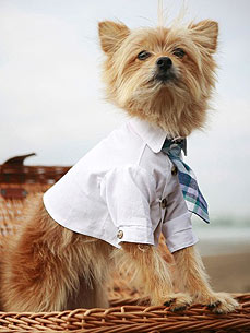 Etsy Fave! Preppy Puppy Clothes