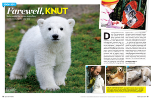 Farewell, Knut: 2006-2011
