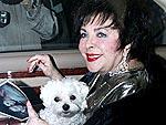 Elizabeth Taylor's Furry Friends