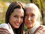 Jane Goodall Teams Up with Angelina Jolie in New Film