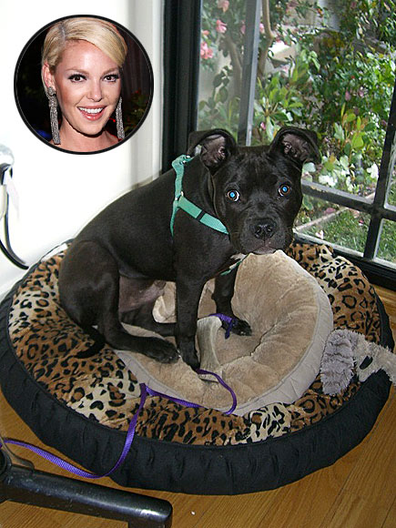O'DONNELL DOG BED, $79.95