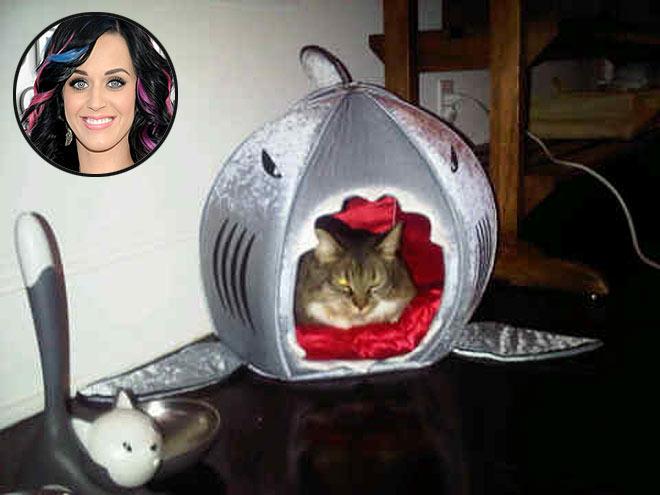 PRIMA DOG SHARK BED, $69  photo | Katy Perry