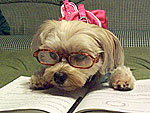 The World's Nerdiest Pets
