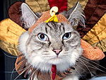 Gobble, Gobble! Thankful Cats and Dogs