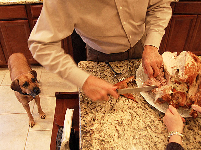 Pet vs. Turkey: 22 Hungry Stare-Downs