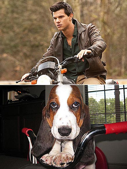 WOLF PACK photo | Taylor Lautner