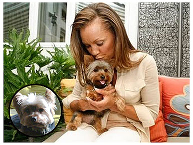 Vanessa Williams's Dog Goes Missing During Rainstorm