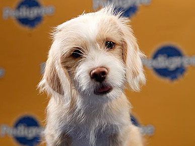 C.B. Crowned MVP of Puppy Bowl VII
