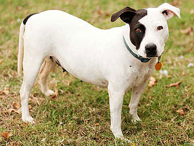 Adopt Me! Dog Ruthie Is a Southern Belle with Manners