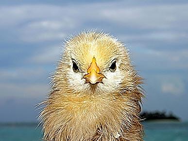 Real-Life Angry Birds!