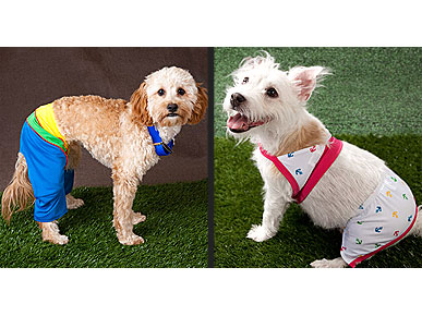 Fun, or Too Funky? Bathing Suits for Dogs
