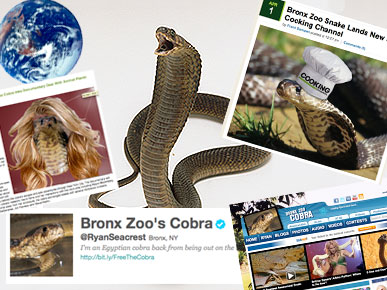 Bronx Zoo Cobra Takes Over ... Everything