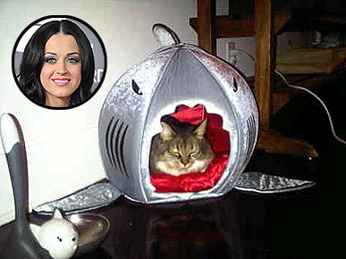 Get the Look: Kitty Purry&#39;s Fierce Shark Bed