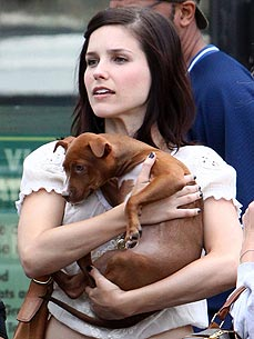 Sophia Bush: My Rescue Pits Are the 'Loves of My Life'