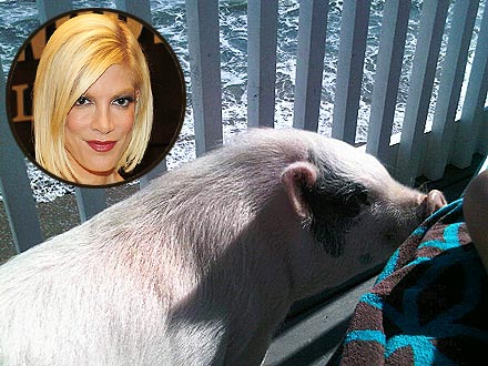 Tori Spelling&#39;s Pig Goes to the Beach