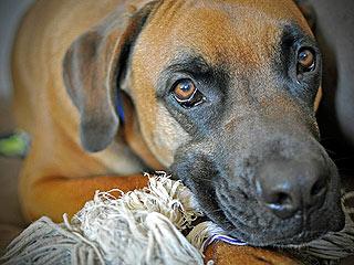 Cutest Pet on Twitter: Enzo!