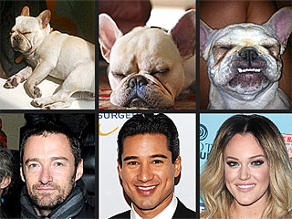 Puppy Face-Off! Who Has the Cutest Sleeping Frenchie? | Hugh Jackman, Lacey Schwimmer, Mario Lopez