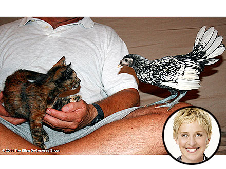 Ellen DeGeneres Rescues a Sick Kitten