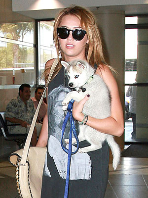 Miley Cyrus Tweets About New Dog Floyd