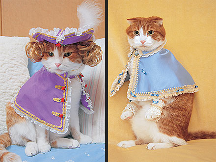 Stylish Kitties Look Catwalk-Ready in Fashion Cats| Cats, Pet Style