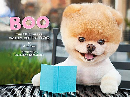 Giveaway! Prize Packs from Boo, the World's Cutest Dog