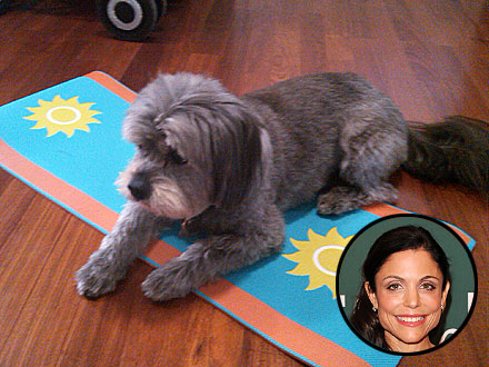Bethenny Frankel's Dog Does Yoga: Photo