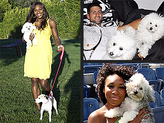 Love Match! U.S. Open Stars & Their Dogs | Serena Williams, Venus Williams