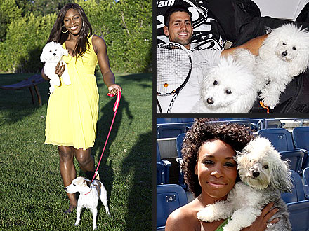 Love Match! U.S. Open Stars &#38; Their Dogs | Serena Williams, Venus Williams