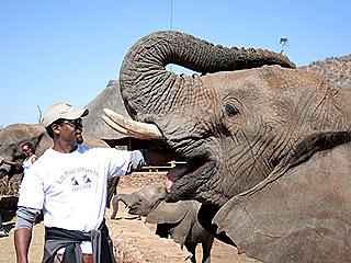 Elephants, Lion Cubs: Blair Underwood Ticks Items Off His Bucket List | Blair Underwood