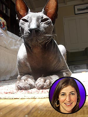 Slurp! Mayim Bialik's Cat Gets Toasted on His Birthday | Mayim Bialik